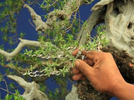 Pengawatan bonsai