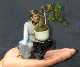 membentuk bonsai
