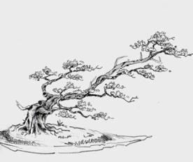 Bakalan Bonsai