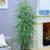 Mengenal Lebih Dekat Pohon Ficus Maclellandii